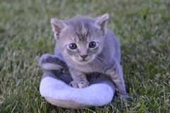 Cat baby Stock Images