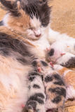 Cat baby in the sand Royalty Free Stock Photography