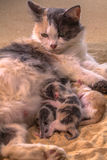 Cat baby in the sand Royalty Free Stock Photo