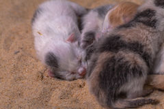 Cat baby in the sand Stock Image