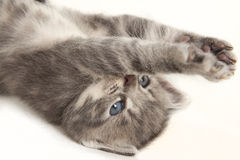 Cat baby stretches his paws Stock Photo