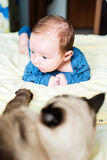 Cat and baby Stock Image