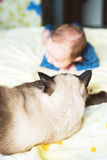 Cat and baby Royalty Free Stock Photo