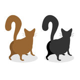 Cat Back. Pet escapes. Funny animal with bushy tail.  Stock Photos