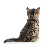 Cat back view. Kitten sitting isolated on white. Royalty Free Stock Images