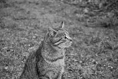 Cat Background Foto de Stock Royalty Free