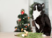 Cat on the background of a Christmas tree decorated with Royalty Free Stock Photos