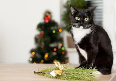 Cat on the background of a Christmas tree decorated with royalty free stock photo