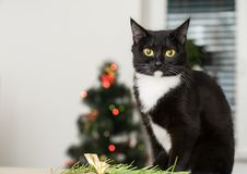 Cat on the background of a Christmas tree decorated with stock image