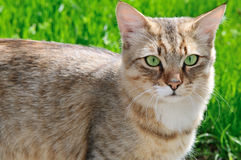 Cat on a background of green grass Stock Photo