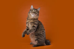Cat on a background isolated Stock Photos