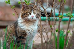 Cat with a background out of focus royalty free stock photography