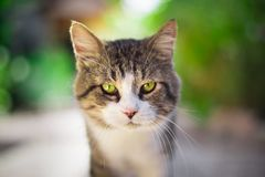 Cat with a background out of focus. In the garden royalty free stock photos