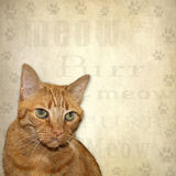 Cat Background Stock Photos