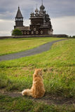 Cat on the background of the wooden churches Stock Images