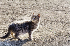 Cat with BackLit Royalty Free Stock Photo