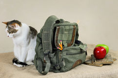 Cat And Backpack. Cat Sitting Near The Backpack On The Linen Cloth Stock Image
