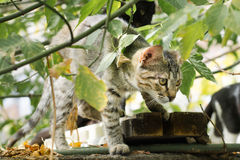 Cat in backyard. Cat hunting something in the  backyard Royalty Free Stock Photography