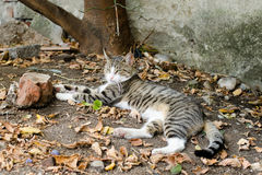 Cat in backyard Royalty Free Stock Images