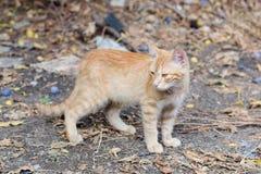 Cat in backyard Royalty Free Stock Image