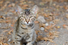 Cat in backyard Royalty Free Stock Photos