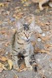 Cat in backyard Stock Photography