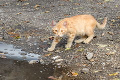 Cat in backyard. Cat playing in the  backyard Royalty Free Stock Photography