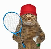 Cat with badminton racket royalty free stock image