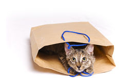 Cat in a bag. Tabby cat inside a paper bag Royalty Free Stock Images