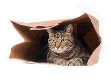 Cat in a bag Stock Photography