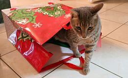 Cat in a bag Royalty Free Stock Images