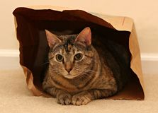 Cat in bag. Cat sat inside paper bag stock photo