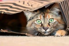 Cat in bag. Beautiful cat hiding in bag Royalty Free Stock Images