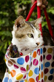 Cat in the bag. Royalty Free Stock Photography