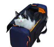 Cat in bag isolated Stock Image