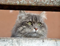 Cat on a balcony Royalty Free Stock Photography