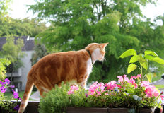 Cat on balcony. Cat and flower pot on balcony rail Stock Photography