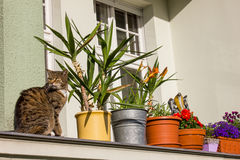 Cat on a Balcony Stock Photography