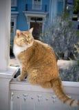 Cat on balcony rail. Orange colored tabby cat sitting on balcony rail Royalty Free Stock Image