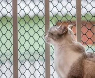 Cat by a balcony`s window stock photos