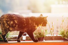 Cat in the balcony with sun lens flare Stock Photography