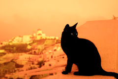 Cat on balcony in the sunset. Wild cat sitting on the balcony of a hotel in Santorini, Greece Stock Images