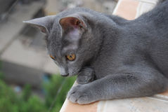 Cat at balcony watching Stock Photography