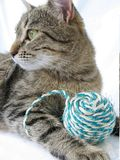 Cat and ball. Brown cat and ball Royalty Free Stock Photos