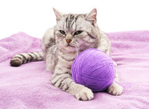 Cat with a ball on the coverlet. Stock Image