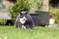 Cat ball Stock Image