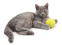 Cat with a ball. Royalty Free Stock Images