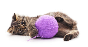 Cat with a ball. Stock Image