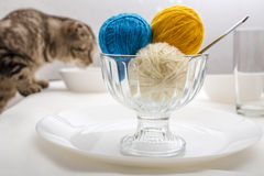 Cat  and ball of wool yarn, which lie like dessert. Scottish fold cat and balls of wool yarn, which lie like ice cream dessert Royalty Free Stock Photos