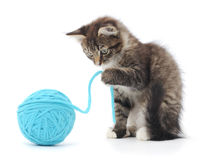 Cat with ball of yarn Stock Images